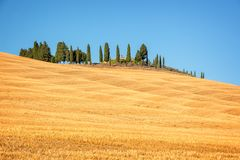 Beautiful typical landscape of Val d`Orcia in Tuscany withvivid colors in summer, Val d`Orcia, Tuscany Italy Royalty Free Stock Image