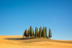 Beautiful typical tuscan landscape with cypress trees in a field in summer, Val d`Orcia, Tuscany Italy. Beautiful typical tuscan landscape with cypress trees in Royalty Free Stock Photos