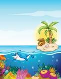 Beautiful underwater creatures Stock Images