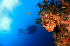 Free Beautiful Underwater Landscape And Scenery Stock Photos - 214216293