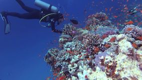 Beautiful underwater landscape with tropical fish and corals. Life coral reef. Egypt stock video