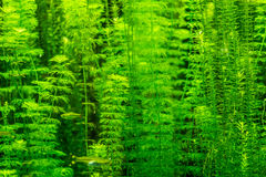 Beautiful underwater plants Royalty Free Stock Images