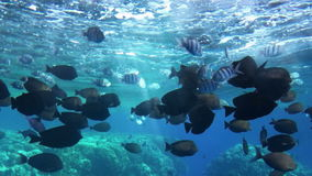 Beautiful underwater porthole view of tropical fishes swimming in slow motion. Diving bottom window porthole view of tropical fishes swimming in blue ocean with stock footage