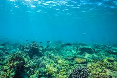 Beautiful underwater scene with marine life in sunlight in the blue sea. Maldives underwater paradise Stock Photography