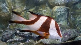 Tropical fish. Beautiful underwater  and tropical fish Stock Image