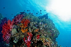 Beautiful underwater view Royalty Free Stock Images