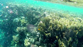 Beautiful underwater view of fishes and corals stock video footage