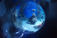 Beautiful underwater world in a drop of water. Wonderful and beautiful underwater world with different inhabitants in a drop of water Stock Images