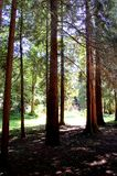 Beautiful, unique, beautifully lighted forest clearing Stock Photography