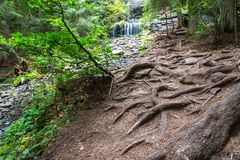 Beautiful , unique, crystal clear small waterfall scenic view, pine tree roots on the foreground Royalty Free Stock Photography