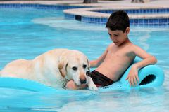 Beautiful unique golden retriever labrador dog and boy relaxing at the pool in a floating bed, dog super funny. Beautiful unique golden retriever labrador dog royalty free stock photo