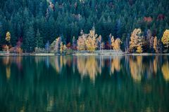 Beautiful unique vulcanic lake at autumn,  Lake Saint Ana deciduous  colorful woods mixed with pine woods. Reflecting on the crystal clean water in Transylvania royalty free stock photography