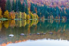 Beautiful unique vulcanic lake at autumn, Lake Saint Ana deciduous colorful woods mixed with pine woods reflecting on the crys. Tal clean water in Transylvania stock image