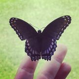 Beautiful, uniquely colored butterfly Royalty Free Stock Photos