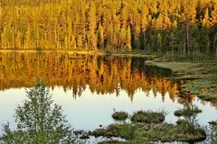 Beautiful untouched nature of the Finnish Lakes Royalty Free Stock Photography