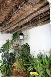 Beautiful and unusual celling with plenty of plants in Frigiliana - Spanish white village Andalusia. Beautiful and charming with its narrow streets and footpaths Royalty Free Stock Photos
