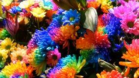 Beautiful unusual interesting multi-colored rainbow peonies, daisies, roses. Selection of flowers, unusual flower color. Beautiful unusual interesting multi stock video