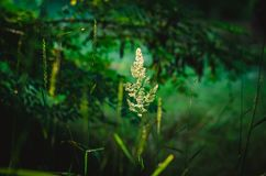 The illusion of a flying spikelet hanging in the air against a dark green background of leaf forest. The background is blurred. Sh royalty free stock photography