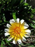 Beautiful up close of yellow white flower. Up close look at yellow white flower Royalty Free Stock Photos