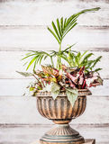 Beautiful urn planter with various tropic plants at white wooden wall background, front view. Florist and Container gardening conc Royalty Free Stock Photos