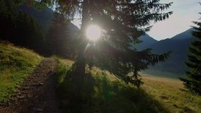 Beautiful valley Chocholowska at dawn, Tatra Mountains, Poland stock footage