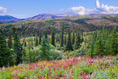 Beautiful Valley in Denali National Park. Beautiful Valley in Summer in Denali National Park, Alaska Stock Image