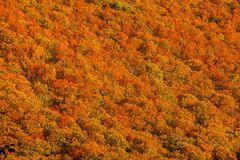 Beautiful valley mountain hill with seasonal colorful trees in Japan Royalty Free Stock Photography