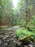 Beautiful valley of wild Doubrava river in Bohemian highlands in checz republic. Beautiful forest and rocks in valley of wild Doubrava river in Bohemian stock images