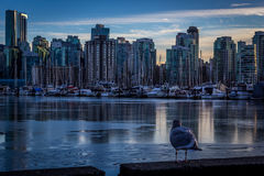 Beautiful Vancouver city Royalty Free Stock Photography