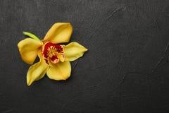 Beautiful vanilla flower. On dark  background Stock Images