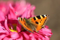 Beautiful varicolored butterfly Stock Photo