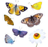 Beautiful varicoloured butterflies Royalty Free Stock Image