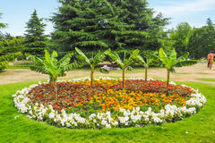 Beautiful variegated flowerbed in Greenwich Park, London on a sunny summer day. Big and beautiful variegated flowerbed in Greenwich Park, London with royalty free stock photos
