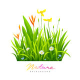 Beautiful variety of flowers with green leaves Stock Photos