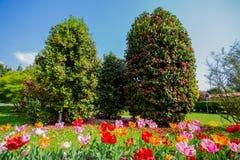 Beautiful various kinds of tulips in the botanical garden of Villa Taranto in Pallanza, Verbania, Italy. stock photo