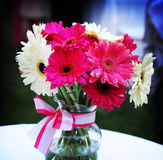 Beautiful Vase of Flowers. Huge white and shocking pink gerberas in a vase with ribbon, light up a table Stock Image
