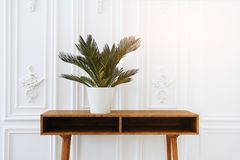 Beautiful vase with plants. Ceramic pot on a wooden table. Home indoor plants. Beautiful aesthetic interior. Minimalism in the stock photography