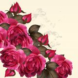 Beautiful  vector background  with realistic  vintage style. Vector cute pink roses in vintage style for design Royalty Free Stock Photo