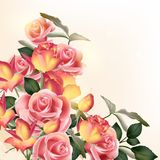 Beautiful vector background with  roses. Vector cute pink roses in vintage style for design Royalty Free Stock Photos
