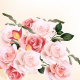 Beautiful vector background with  roses. Vector cute pink roses in vintage style for design Stock Photography