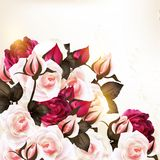 Beautiful vector background with roses in vintage style Royalty Free Stock Image