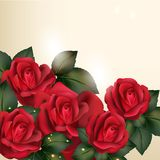 Beautiful vector background in vintage style with  rose  flowers Royalty Free Stock Images