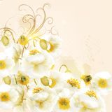 Beautiful vector background  with white poppy flowers Royalty Free Stock Photos
