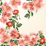 Beautiful  vector background with wild  roses Stock Images