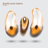 Beautiful vector feathers illustration. Beautiful vector orange and brown feathers illustration Royalty Free Stock Photo