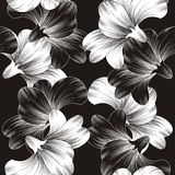 Beautiful vector flower background Royalty Free Stock Photo