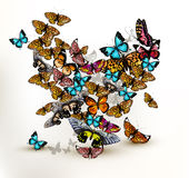 Beautiful vector heart from a lot of realistic colorful butterfl Royalty Free Stock Photography