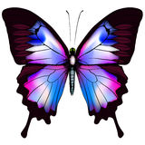 Beautiful vector isolated blue butterfly Stock Photography