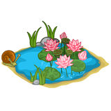 Beautiful vector lake with snail, reeds and lilies. Beautiful lake with snail, reeds and lilies. Vector illustration in cartoon style on white background. Image Stock Images