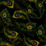 Beautiful vector peacock feathers seamless pattern Stock Photography